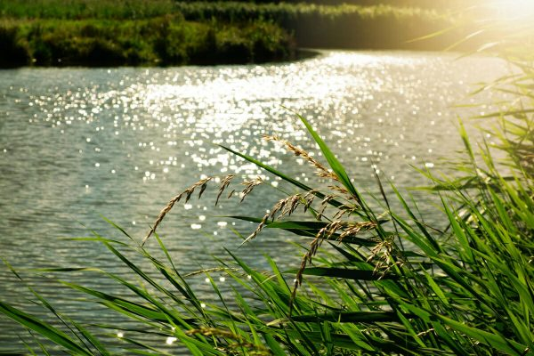 Waikato River Float