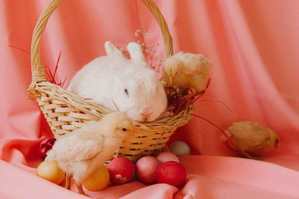 Egg Hunt Competition